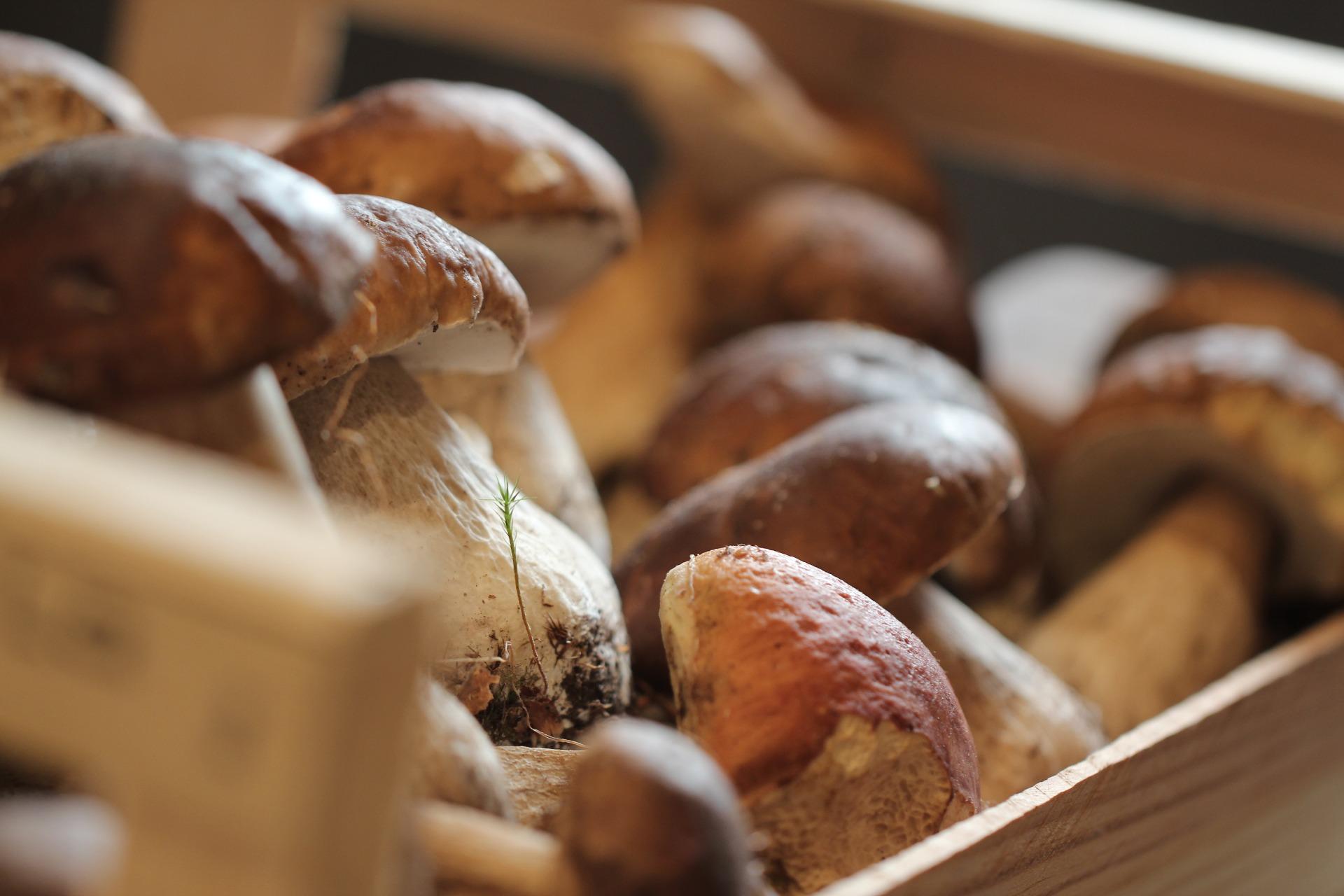 funghi porcini milano